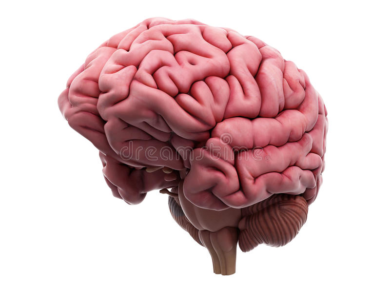 Le cerveau illustration stock