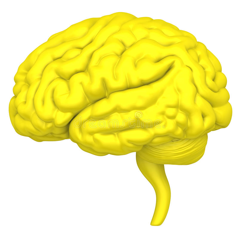 Le cerveau est un plan rapproché d'isolement sur le fond blanc illustration de vecteur
