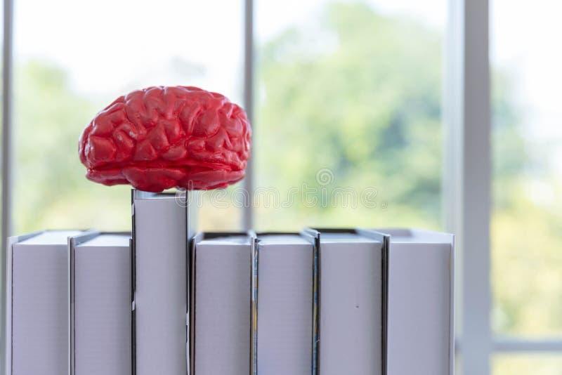 Le cerveau sur le dessus des livres photographie stock libre de droits