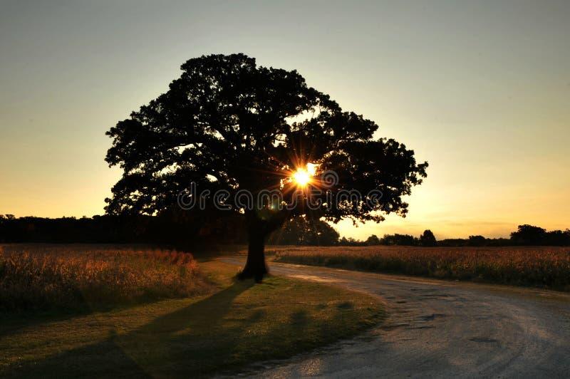 Le chêne de 100 ans photo stock