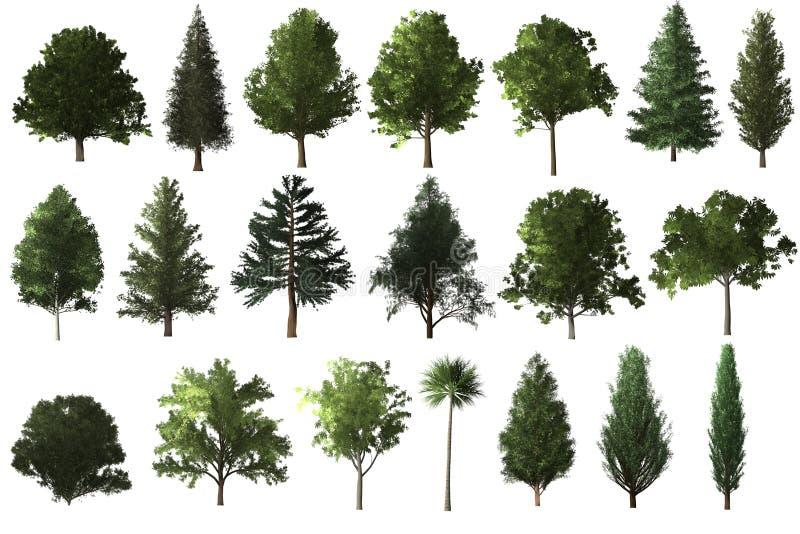le chêne vert avec l'herbe et le ciel bleu opacifient le fond illustration stock