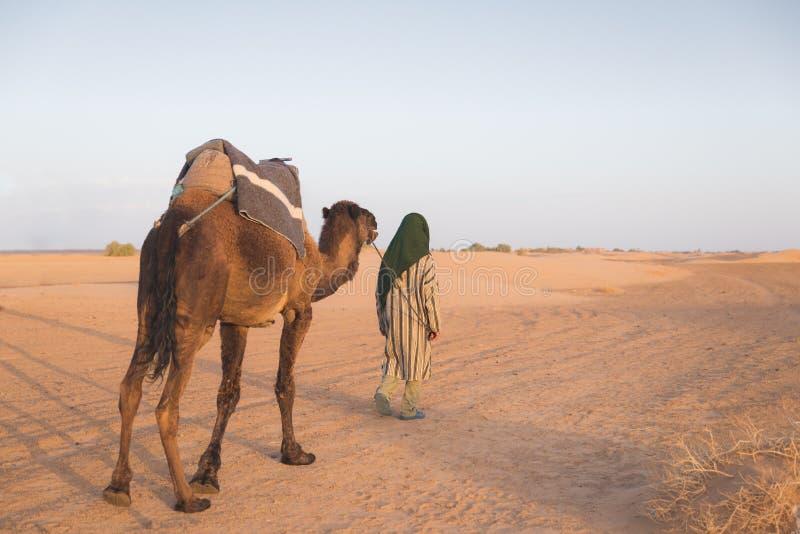 Le chameau Arabe d'avance de guide dans le désert du Sahara images stock