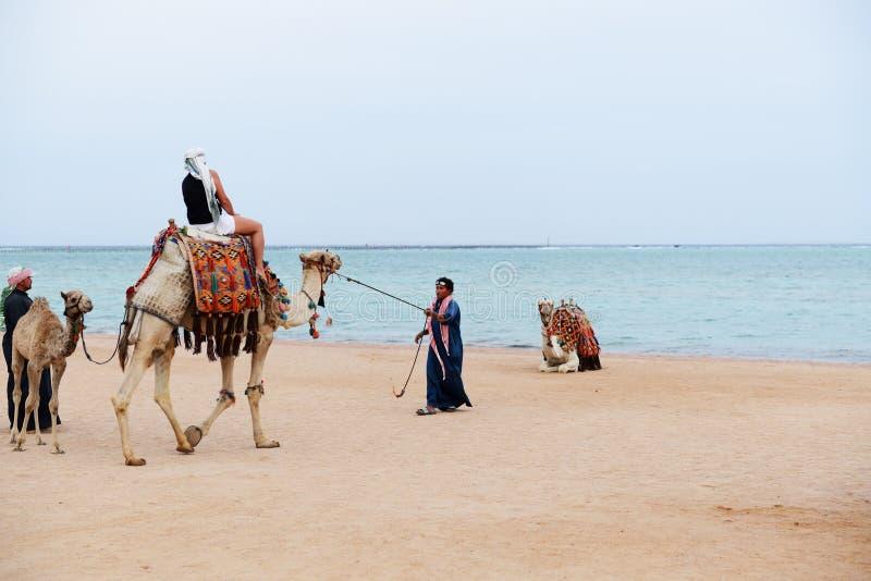 Le chameau de touristes de tours sur la plage avec l'aide de l'homme égyptien photo stock