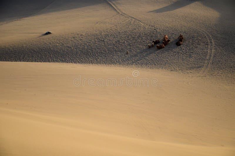 Le chameau et le désert photographie stock