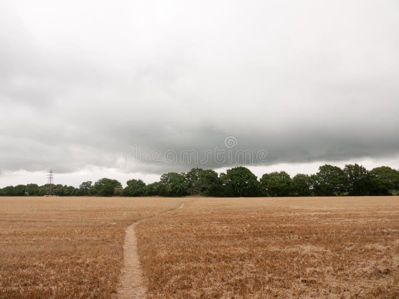 Le champ britannique obscurci de culture a moissonné avec le chemin de promenade  image stock