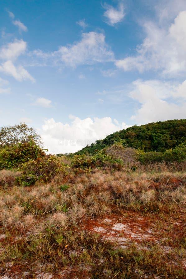 Le champ d'herbe naturel paisible de l'île de Koh Mud Sum près de Samui est photos stock