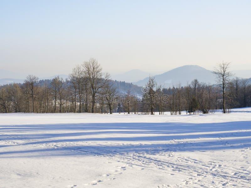 Le champ d'hiver et la neige de campagne de forêt ont couvert le paysage panoramique d'arbres, colline en montagne hory de luzic photos stock