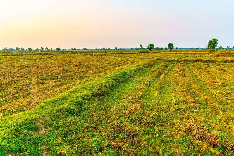 Le champ de l'agriculteur est beau paysage photo libre de droits