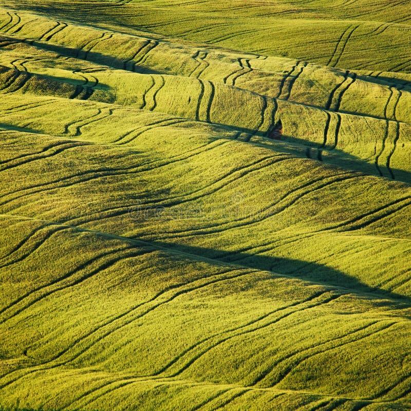 Le champ et les voies de blé donnent au résumé une consistance rugueuse en été La Toscane, Ital photo stock