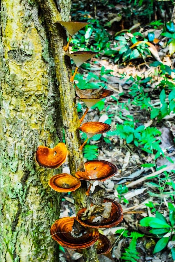 Le champignon dans le paysage de parc national de Sri SAT Cha Na Lai, Sukhothai, Thaïlande photos stock