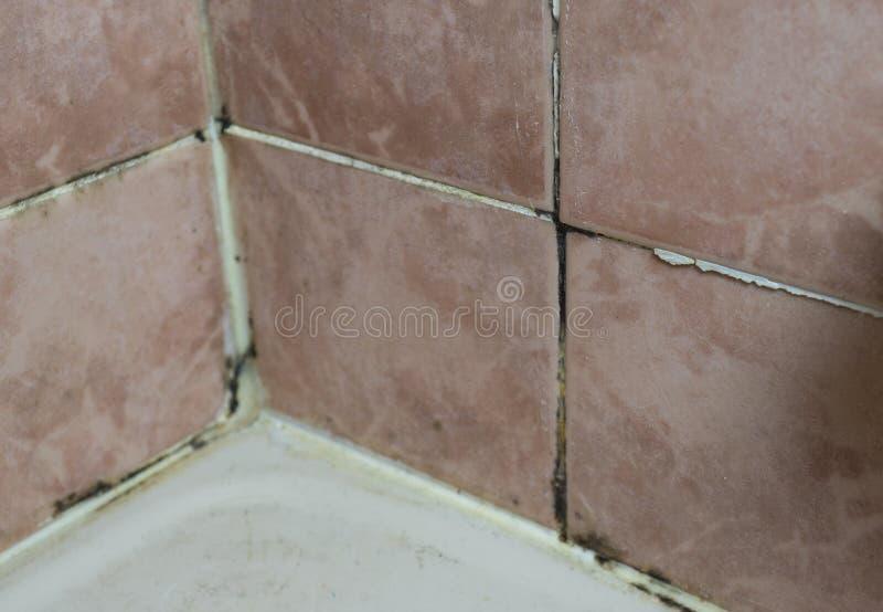 Le Champignon Sélevant Sur La Tuile Joint Le Coin De Mur De Salle - Champignon salle de bain