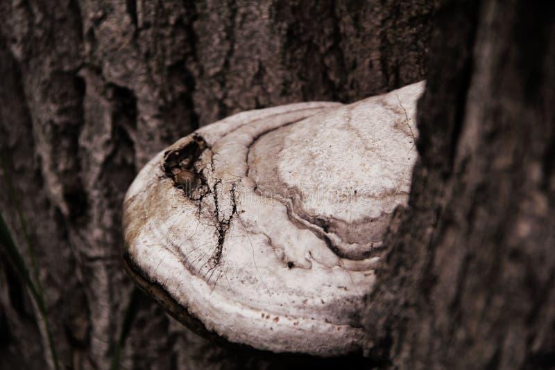 Le champignon se développe sur un arbre image stock