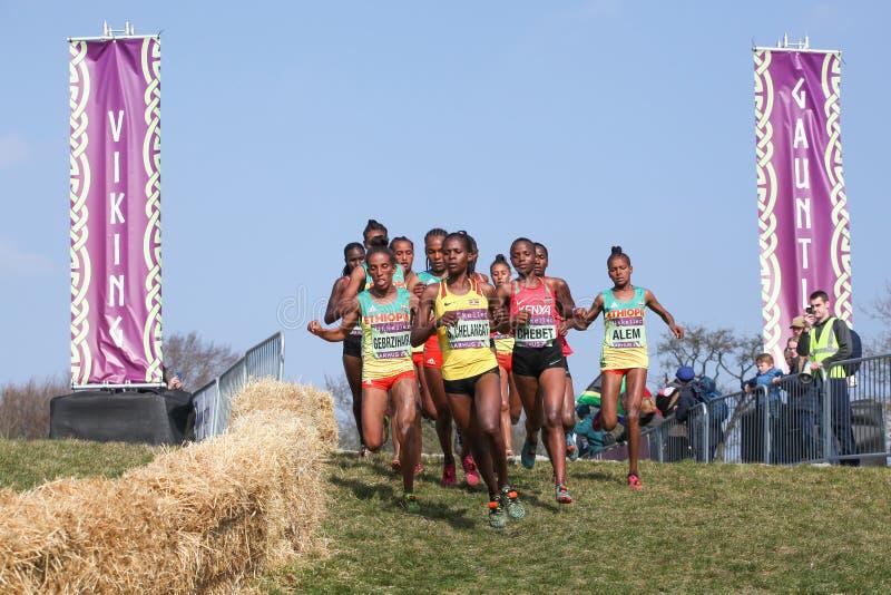 Le championnat de pays crois? du monde d'IAAF Mikkeller ? Aarhus Moesgaard 2019 avec les femmes juniors emballent image stock