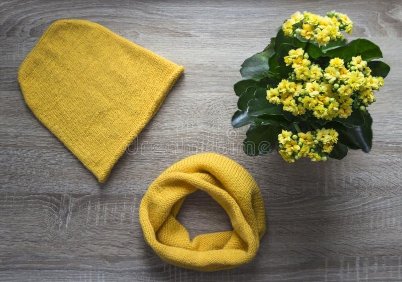 Le chapeau d'écharpe d'avançon de jaune de kalandiva de fleur d'arbre de fond a tricoté le fil laine-acrylique mérinos de mohair  image libre de droits