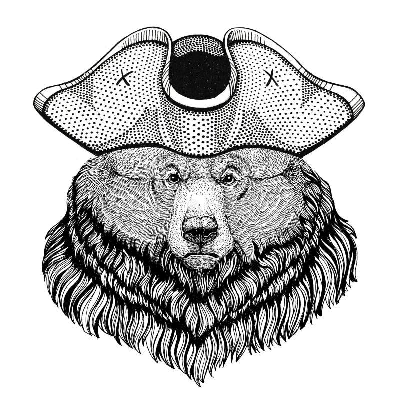Le chapeau de port de pirate de grand ours sauvage d'ours gris a entassé le chapeau, le marin à trois cornes, le marin, le marin, photographie stock libre de droits