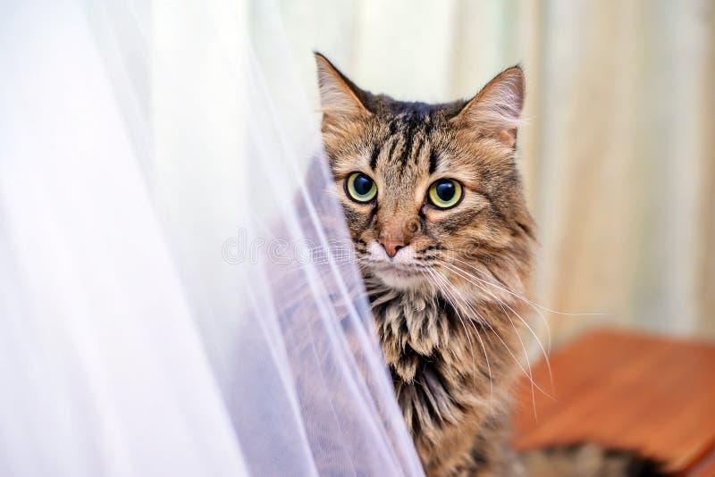 Le chat à côté de la robe de mariage photos libres de droits