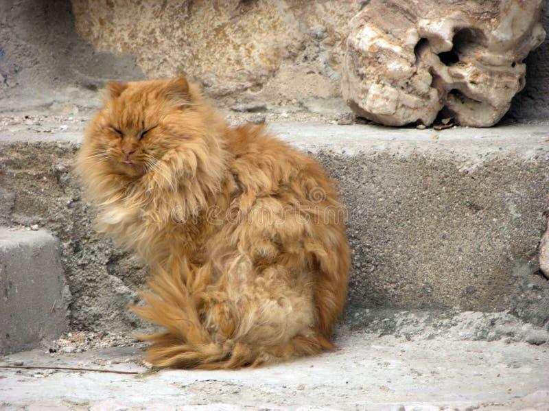 Le chat à cheveux longs orange somnole sur l'étape photo stock