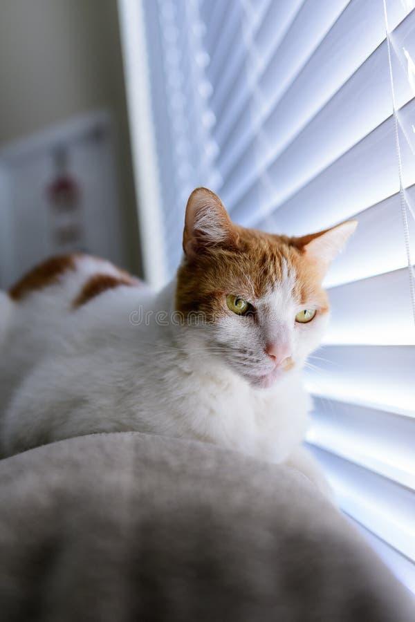 Le chat à la fenêtre photo libre de droits