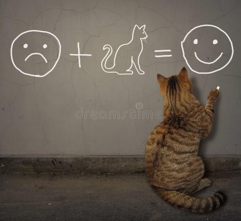 Le chat écrit une équation sur le mur photographie stock libre de droits