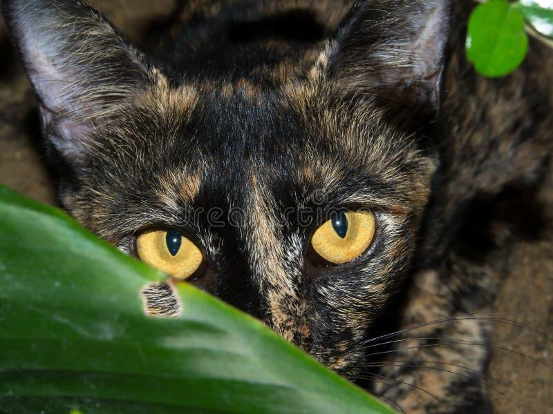 Le chat a été attrapé tout en jouant le cache-cache images stock