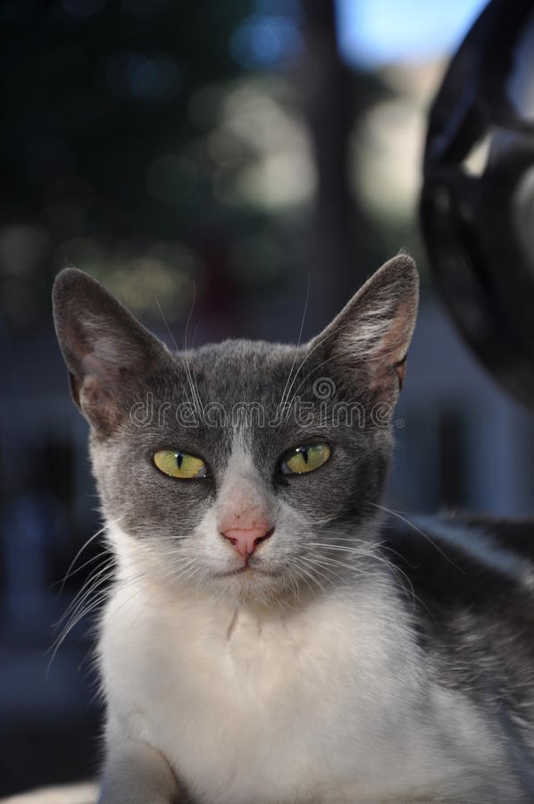 Le chat image stock