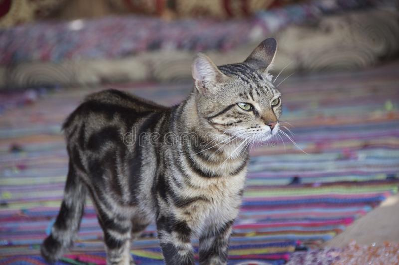 Le chat images stock
