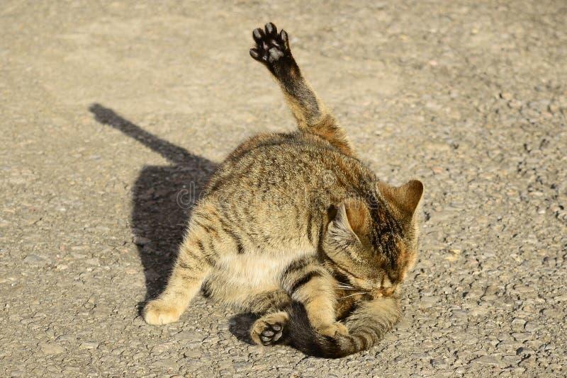 Le chat images libres de droits
