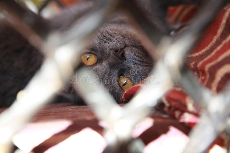 Le chat image libre de droits