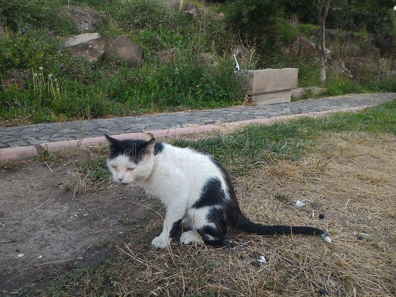 Download Le chat image stock. Image du nique, famille, pique, avec - 76078947