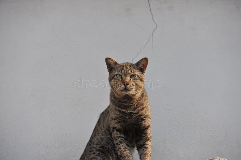 Le chat aiment le tigre photos libres de droits