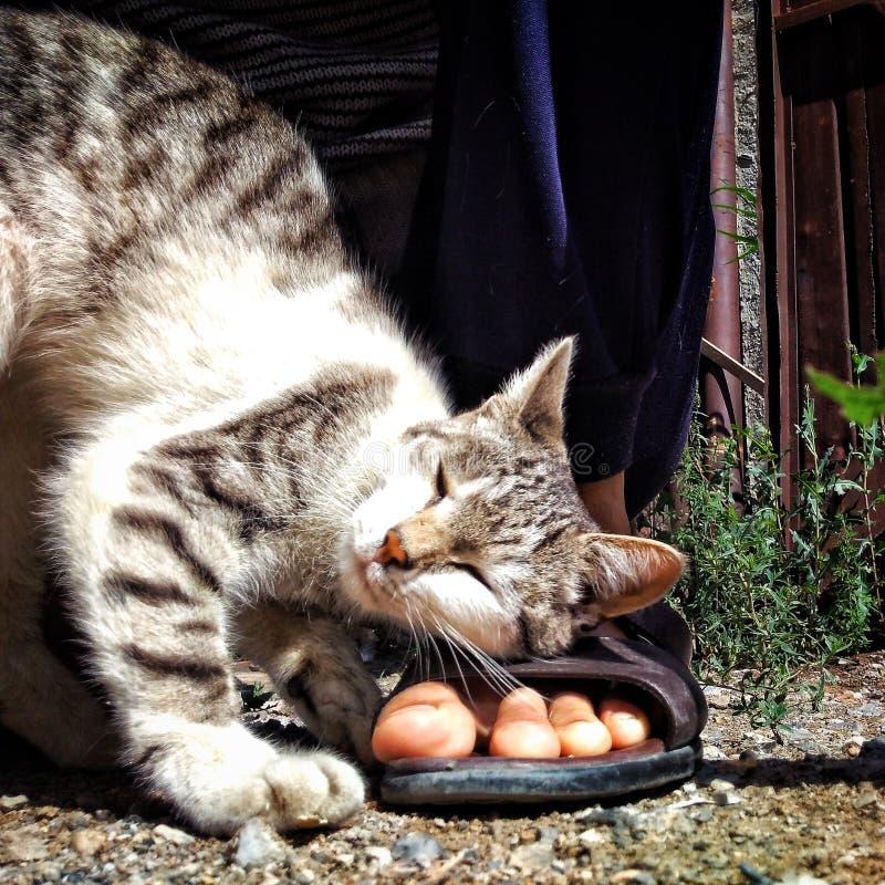 Le chat aiment un chat photographie stock libre de droits