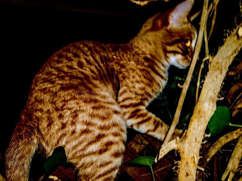 Le chat a attrapé s'élever images libres de droits