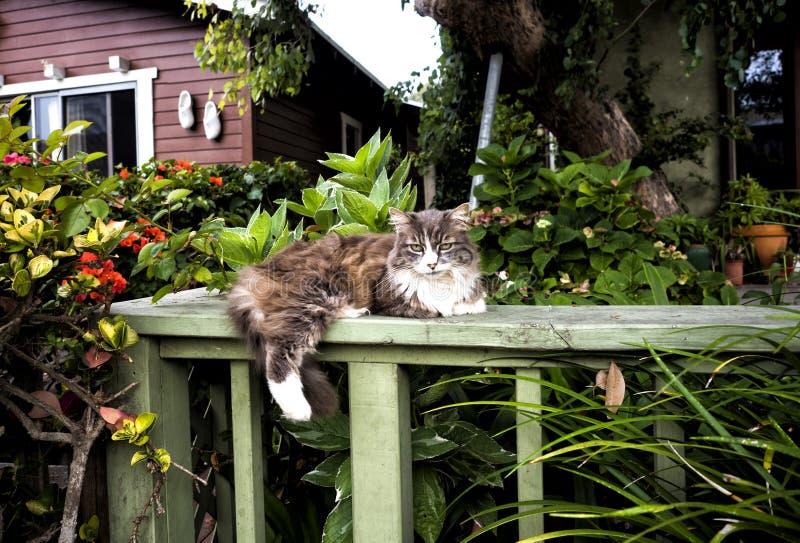 Le chat avec l'expression ennuyée s'est étendu dans un jardin à la plage de Venise, Los Angeles, la Californie image stock