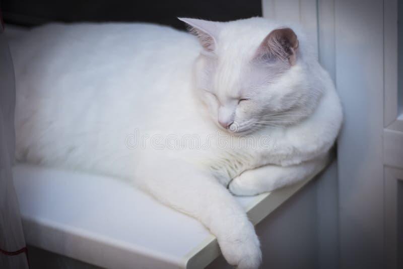 Le chat blanc dort à la fenêtre de nuit images stock