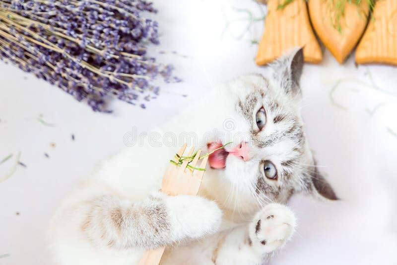 Le chat blanc lèche l'herbe tenant dans des pattes une fourchette en bois d'eco photo libre de droits