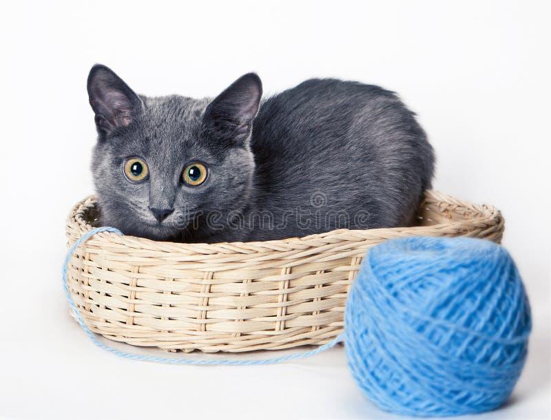 panier chat bleu