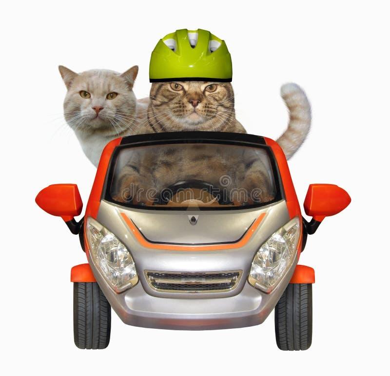 Le chat conduit son ami en voiture image libre de droits