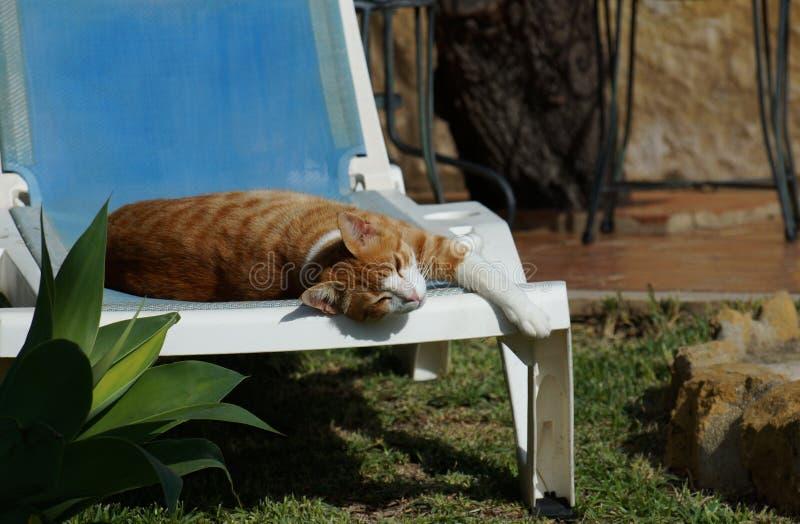 Le chat décontracté de gingembre somnole au soleil chaud photo stock