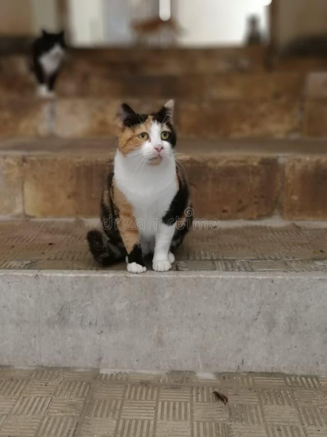 Le chat dans l'escalier photos stock