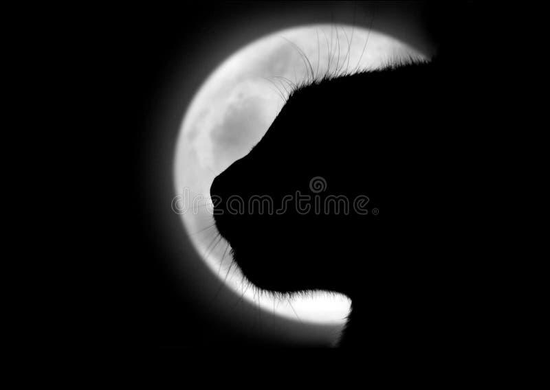 Le chat dans la lune photos stock