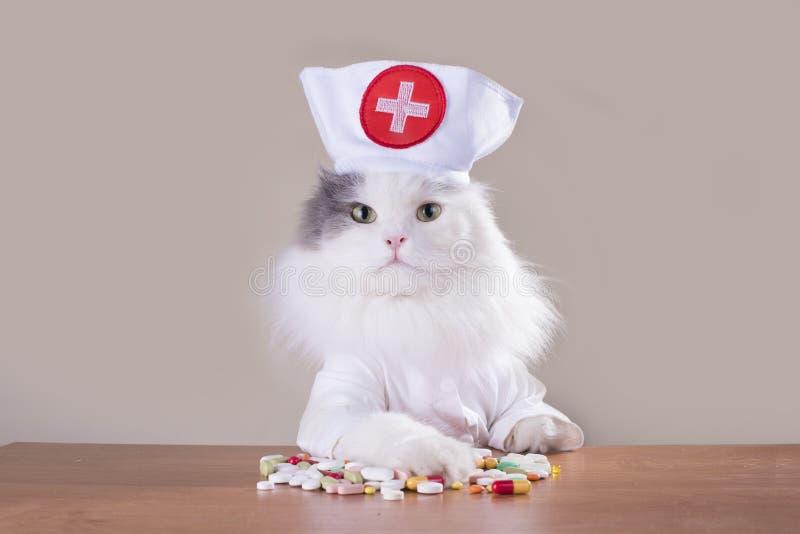 Le chat dans un costume du docteur donne la médecine photo libre de droits