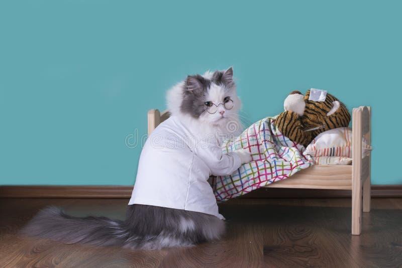 Le chat dans un costume du docteur traite le tigre photo stock