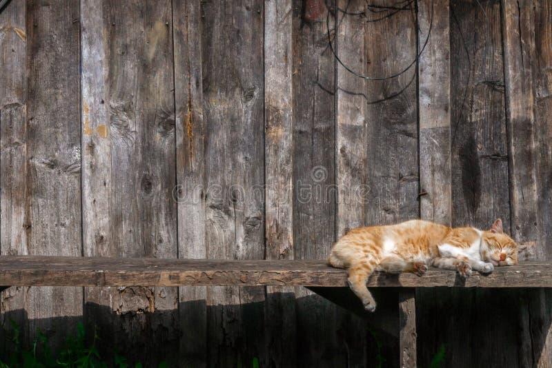 Le chat de Brown détend sous le soleil photos stock