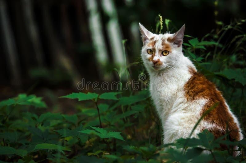 le chat de couleur deux dans un jardin vert est tourné de retour et lavé photo stock