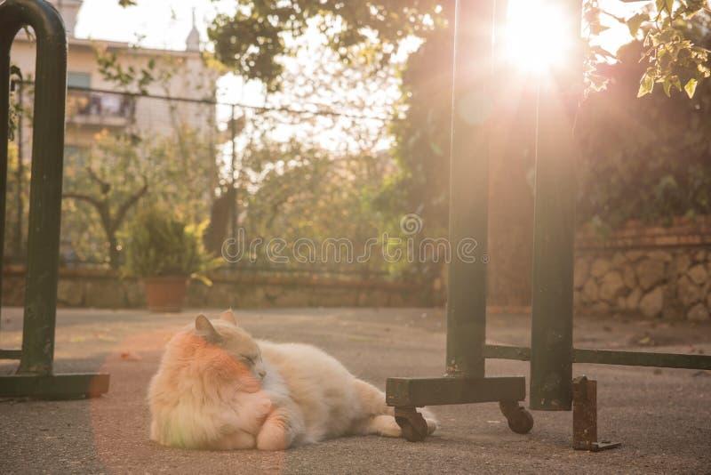 Le chat de coupe apprécient la lumière images stock