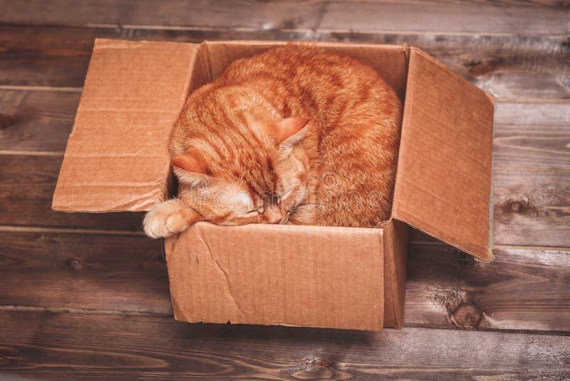 Le chat de gingembre se situe dans la boîte sur le fond en bois dans un nouvel appartement L'animal familier pelucheux fait pour  photographie stock