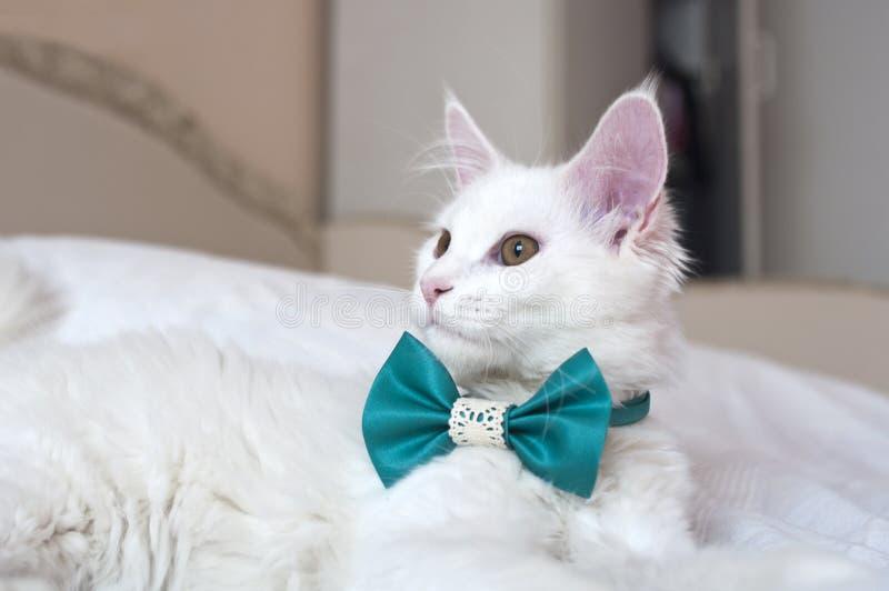Le chat de Maine Coon, de 1 an, se trouve sur le lit photos libres de droits