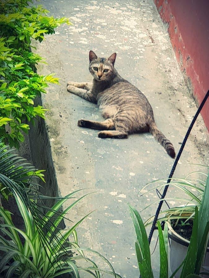 Le chat de mode de repos images stock