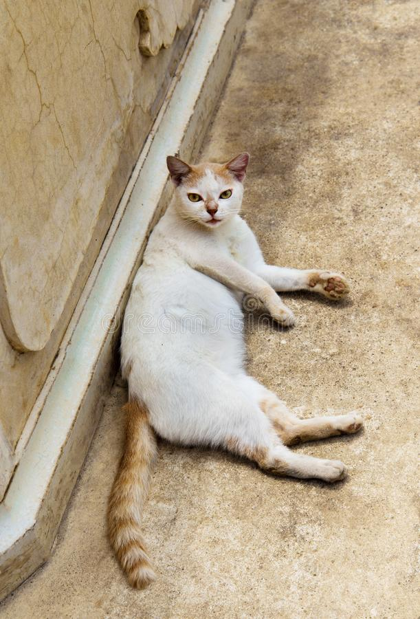 Le chat de rue qui dort au sol photographie stock