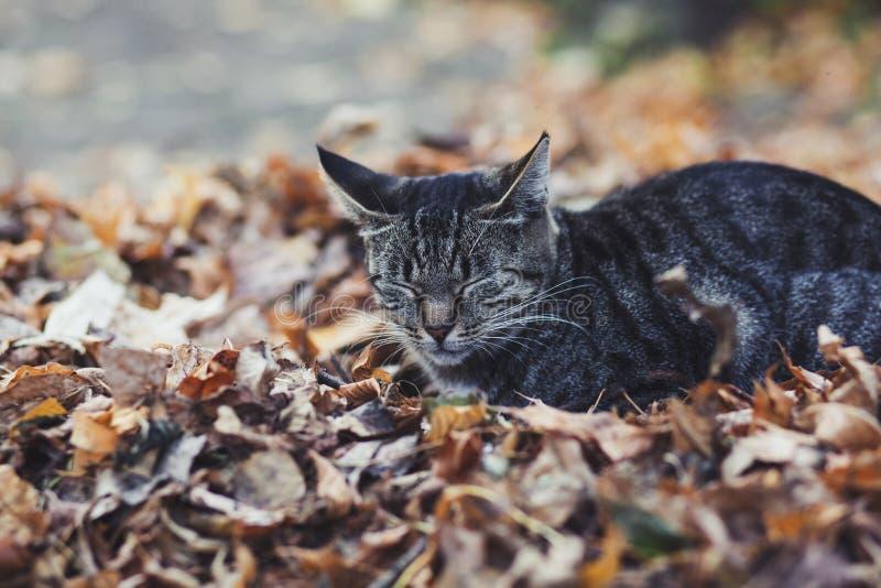 Le chat de rue qui dort image stock
